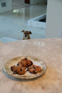 """""""It's so not fair that I can't have any fucking cookies."""""""